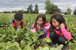 YMCA farm camp teaches campers to grow their own food