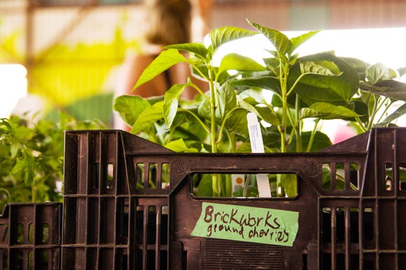 The Evergreen Brickworks Farmers Market.