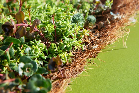Close-up view of green roof substrate mat
