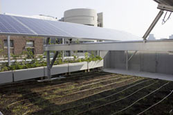 Vegetation and solar panels, all on the same roof