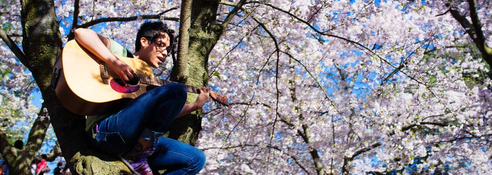 Songwriter, Melinda Suarez, performing amidst the cherry blossoms in High Park.