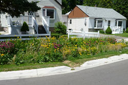 This rain garden in the Lakeview neighborhood of Mississauga, Ontario absorbs stormwater and reduces